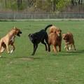 A Trani un'area di sgambatura per cani, sorgerà nei pressi del campo di calcio di via Bovio