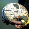 Rugby, i Draghi Bat cedono al Monopoli nell'esordio stagionale