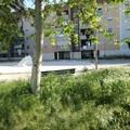 Quartiere Sant'Angelo in preda al degrado, la denuncia del consigliere Branà (M5S)