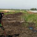 Terreni abbandonati e fondi rustici, il sindaco firma l'ordinanza antincendio