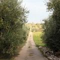 L'agro di Trani risorsa per il turismo