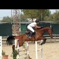 Equitazione, Ilaria Carrozza sul podio a Taranto