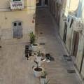 Distrutti vaso e pianta ornamentale in piazza Tomaselli
