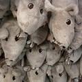 Troppi topi morti in giro per la città