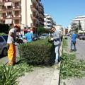 Pulizia e potatura aiuole in via Manzoni al mattino: i commercianti non gradiscono