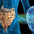 Asse intestino-cervello, nuovo evento presso il centro AttivaMente