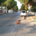 Via Martiri di Palermo, la pista ciclabile diventa parcheggio