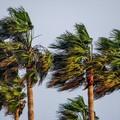 Allerta gialla per vento su Trani e tutta la Puglia