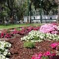 Villa in fiore 2012, i giardini più belli