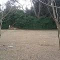 Bonifica del Giardino di Villa Telesio: l'Amiu ha provveduto al servizio di carico e recupero dei rifiuti biodegradabili