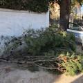 Le pagelle di Giovanni Ronco: piovono alberi e insufficienze