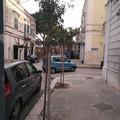 Nuovi alberi in città, l'attività voluta dal Comune per incrementare il verde