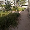 Scuola Fabiano, nel giardino erba alta ed incuria