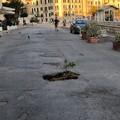 """Buca stradale come fioriera: singolare  """"protesta """" sul porto di Trani"""