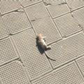 Topo morto ritrovato nella centralissima Piazza Gradenigo