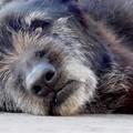 """Trani dice addio al  """"simbolo """" del randagismo locale: è morto il cane Nerone"""