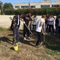 Climate action week, studenti dell'istituto Aldo Moro ripuliscono il cortile della scuola