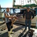La marineria di Trani sempre più protagonista nel salvataggio delle tartarughe