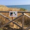 Baia dei Gruccioni, sparito il cartello informativo da poco installato dai volontari di Ecodialoghi
