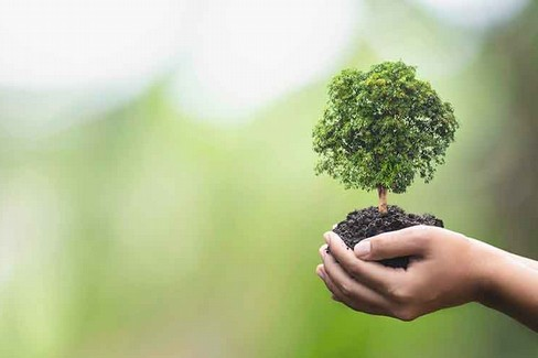 Consulta ambientale