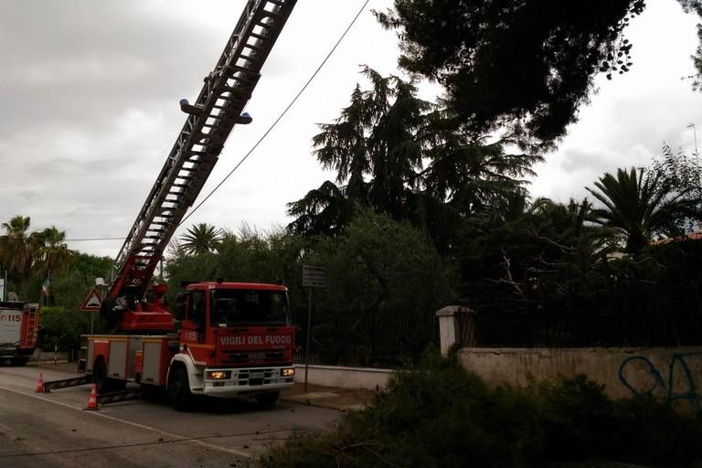 Maltempo, rami pericolosi sulla Trani-Corato: intervento dei vigili del fuoco