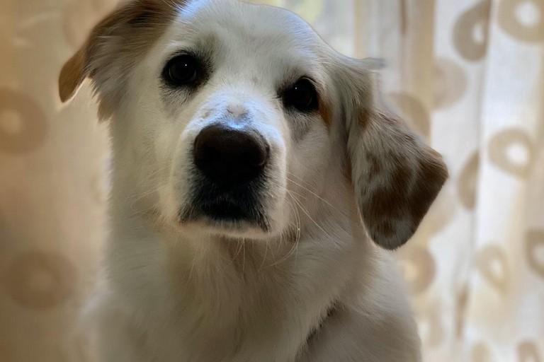 Il cane Igor