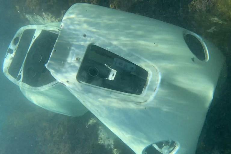 Vespa sottomarina