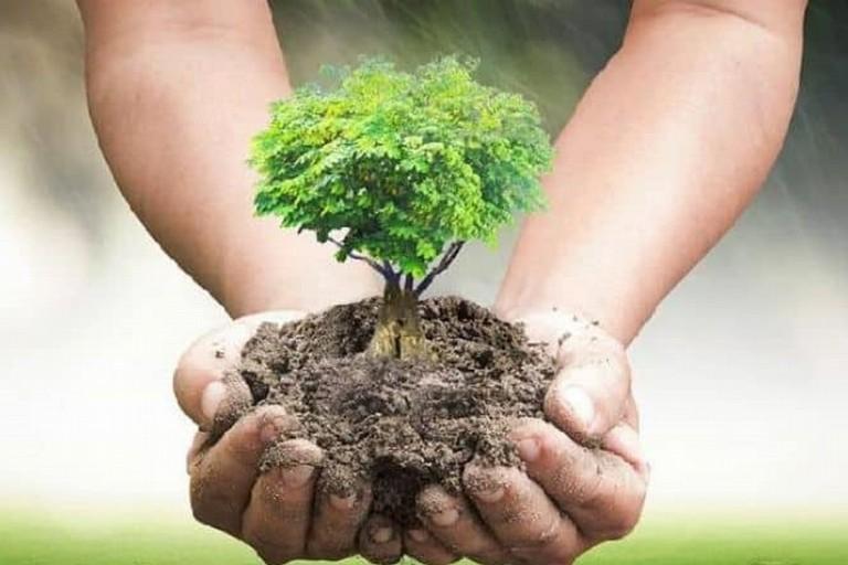 Piantumazione nuovi alberi