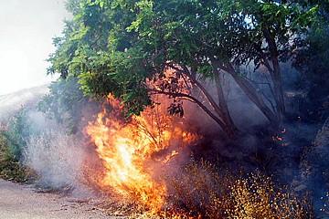 Incendio di sterpaglie a Trani