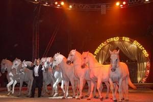 Circo Lidia Togni