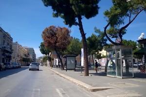 Albero rischia di cadere in piazza Gradenico