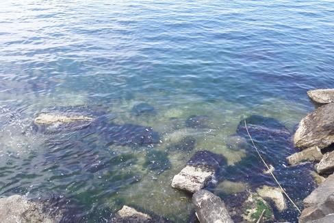 Degrado nel mare di Trani