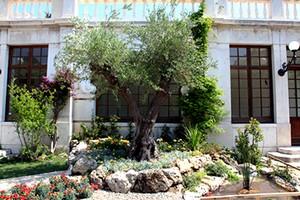 A trani vince l ulivo l albero for Aiuola con ulivo