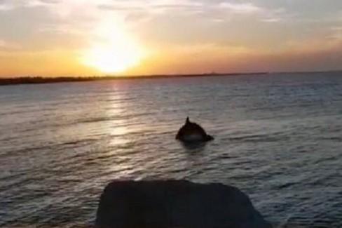 Pasquetta 2018 - la danza dei delfini a Trani al tramonto