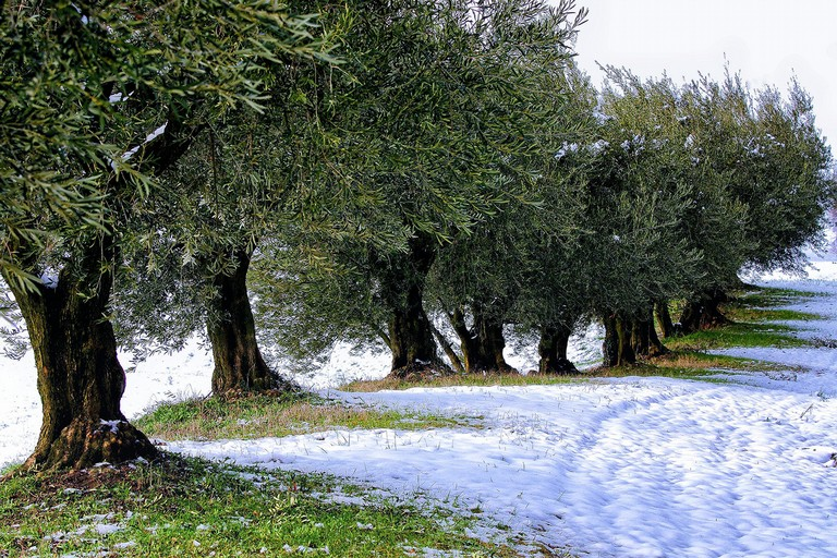 Neve su ulivi