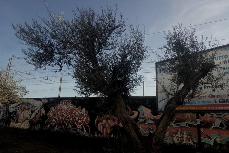 Olive rubate in via Falcone