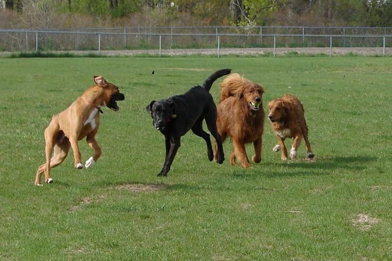 Area di sgambatura per cani