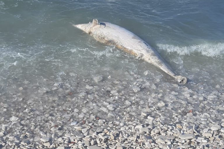 Delfino morto a Trani